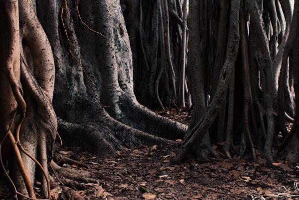 Devir árvore