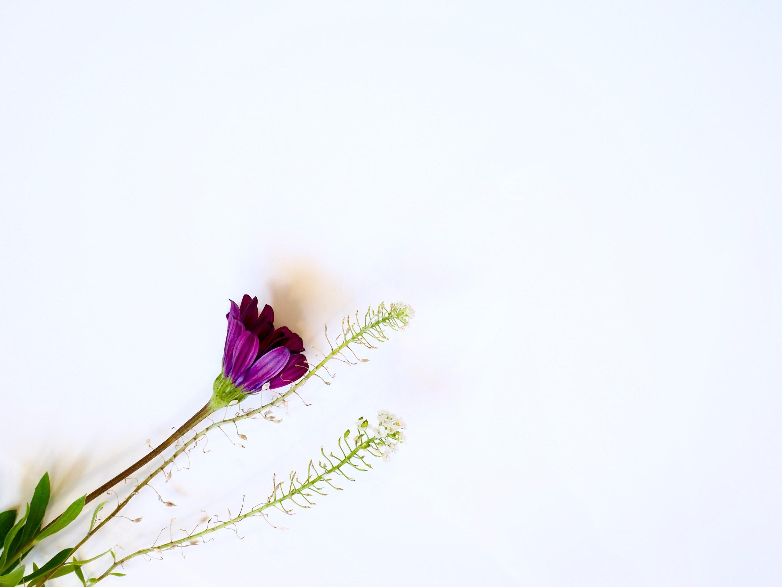 A Flor – Razão Desejante